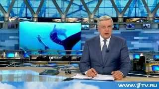 Хвост русалки по телевидению в новостях(Вы можете купить настоящий хвост русалки для плавания как из фильма Н2О просто добавь воды. Хвосты из Герман..., 2015-03-15T10:05:00.000Z)
