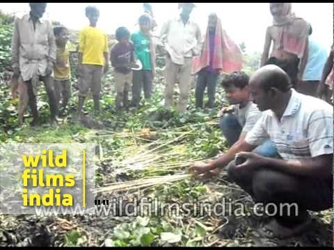 Wooden sticks catch fire from water in Hazaribagh, Jharkhand