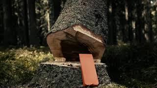 | HUSQVARNA CHAINSAW ACADEMY | Comment abattre un arbre à la tronçonneuse