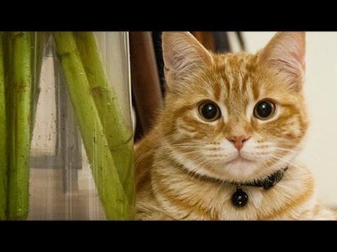 Katzen hauen Sachen um