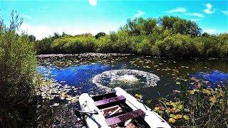 Download Глушим рыбу БОМБОЙ!!! Рыбалка на ДИКОЙ РЕКЕ с ночевкой! Mp3 and Videos