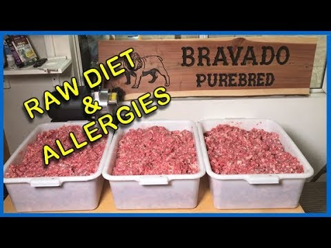 RAW DIET: Step by Step How I Feed My Dogs w/ Allergies (2018)