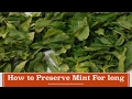 How To Preserve Mint For Long | How To Store Mint For Over One Year video