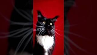 Самые длинные усы у кошек мейн-кун?  у Беста 12 см усы, а у вашего котика сколько?