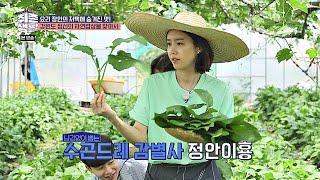※본능 발동※ 수놈만 쏙쏙~ ′수곤드레 감별사′ 채정안(Chae Jung An) 취존생활(Real Life) 9회