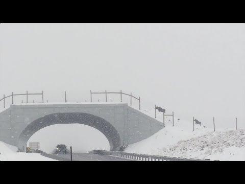 Wildlife bridge helps animals avoid car collisions