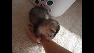 Litter Training Your Ferret