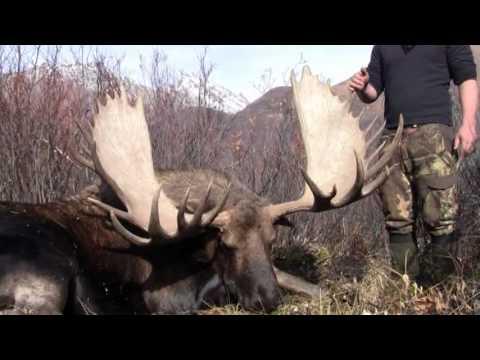 Yukon Moose Hunt 2012