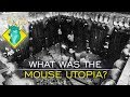 TL DR   What Was the Mouse Utopia