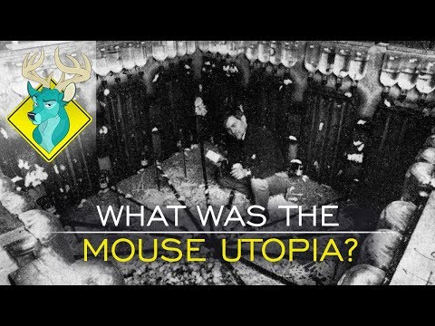 TL;DR - What Was the Mouse Utopia?