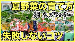 実がなる夏野菜の育て方【畑とプランター】ミニトマト,ナス,ズッキーニ,ピーマン,パプリカ,キュウリ,ゴーヤを家庭菜園で栽培しよう