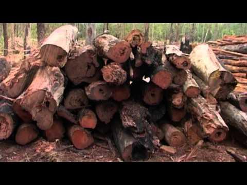 Third world logging -- destroying water catchment