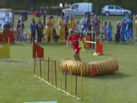 Agility dog 3 brevetto gara Perugia 25/4/2009 Roberto Mucelli ed Aragorn 8° classificato jumping