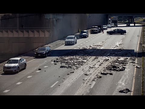 DJ Pup Dawg - Accident causes dead pig over highway