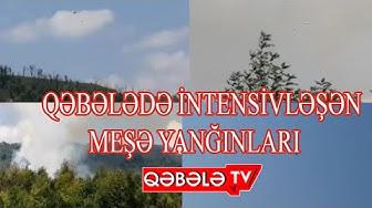 QƏBƏLƏDƏ MEŞƏ YANĞINLARI-QƏBƏLƏ TV