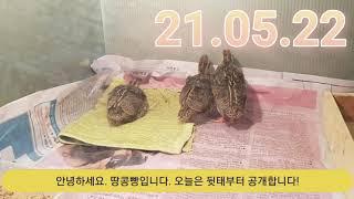 땅콩빵 21.05.22
