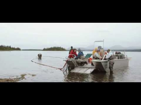 UW Environment: We Are The Alaska Salmon Program