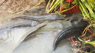 Amazing Fishing Videos Catch A lot Of Fish By Basket Fish Trap - Traditional Basket Fishing Trap