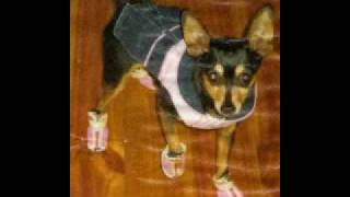 Lost Dog In Adelaide/st Marys - Miniture Pinscher