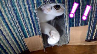 小窓からポコポコバシバシ叩く猫 Cat punch through the window