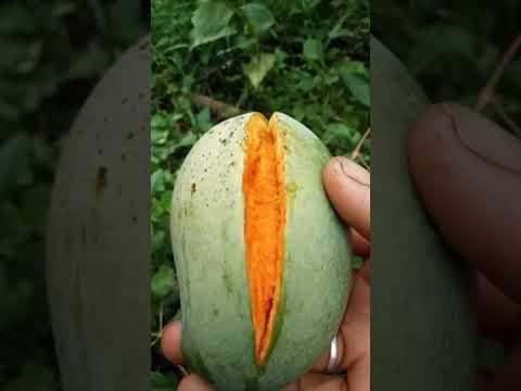 Amazing Sweets Mango #shorts