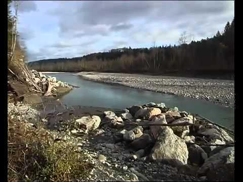 La truite de lac - Inspection de la pêche du Canton de Berne
