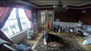 What happens when you leave your energetic German Shepard home alone.