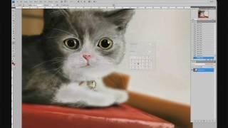 Speed painting: Cat Adobe Photoshop CS 4