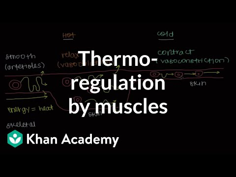 Thermoregulation by muscles | Integumentary system physiology | NCLEX-RN | Khan Academy