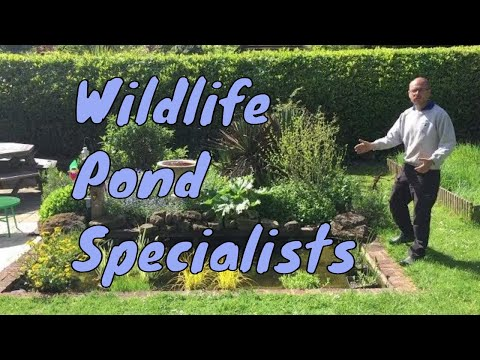 Wildlife Pond Specialists | Pond Restoration | Ponds