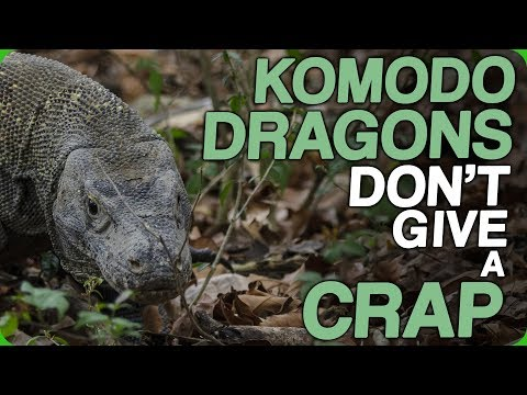 Komodo Dragons Don't Give A Crap (The Worst Ways To Go)