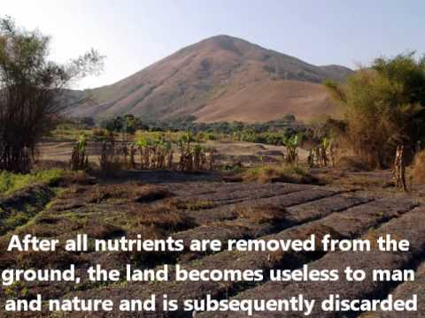 Deforestation Fun Facts - YouTube