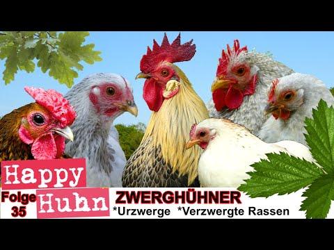 download video happy huhn folge 35 das zwergh hner. Black Bedroom Furniture Sets. Home Design Ideas