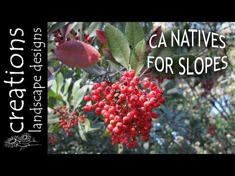 Top 3 California Native Plants For Slopes