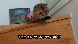 반나절 동안의 헤프닝! - 페르시안 고양이와 진돗개 강…