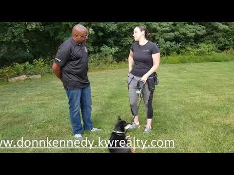 paws-on-dog-training