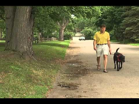 Bloomington Dog Walker Watch Program