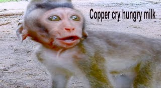Poor Orphan Baby Monkey Cry Request Food, Copper No Milk He Cries In Hungry For It
