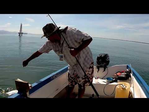 Jack fishing Kingston Harbour Jamaica