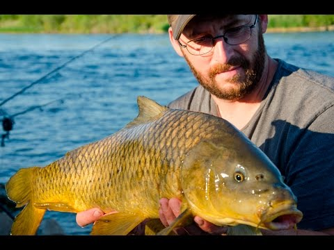 Carp fishing with corn and pack bait