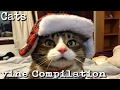 Funny Cats  vine Compilation 2017