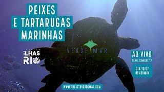 Peixes e tartarugas na nova fase do Projeto Ilhas do Rio  - VERDE MAR AO VIVO #40