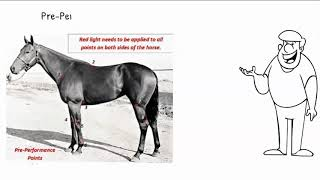 Step 1 Open/Close of the Equine  Bladder Meridian