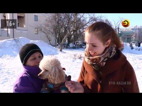 Карликовый пудель Джем - радость для детей и достопримечательность парка на ул. Павлюхина