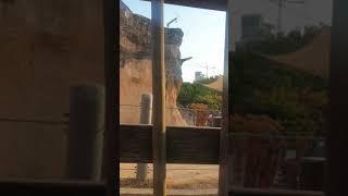 코끼리 보는 류연재(어린이대공원)