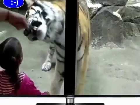 Động vật tấn công người ở sở thú | Nguy hiểm |Mua bán xe đạp điện cũ