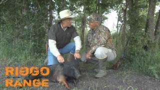 Big Rig on Texas Pigs