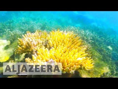 Australia 'falls short' in protecting coral reefs