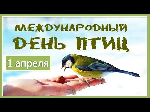 Вопрос: Когда проходит Всемирный день мигрирующих птиц?