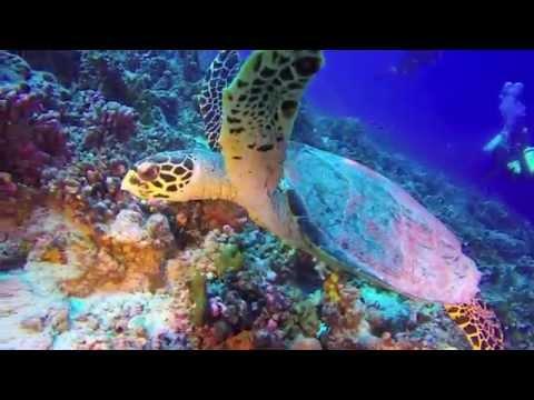 Scuba Diving in Bora Bora & Rangiroa